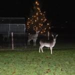 Kerstboom met herten dec. 2013
